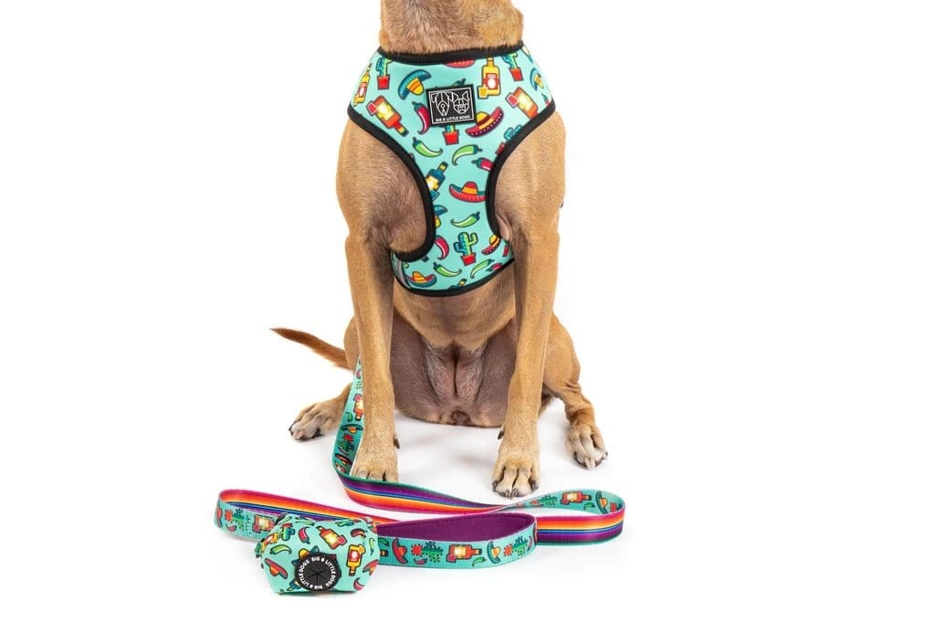 Reversible-Dog-Harness-and-Poop-Bag-Mexican-Fiesta