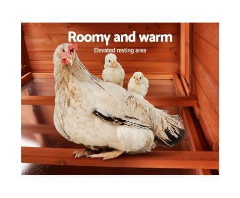 Roomy and Warm Upper Level Chicken Nesting Area