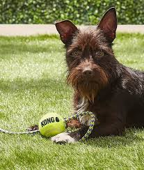 Image of KONG AirDog Squeaker Ball w/ Rope Medium