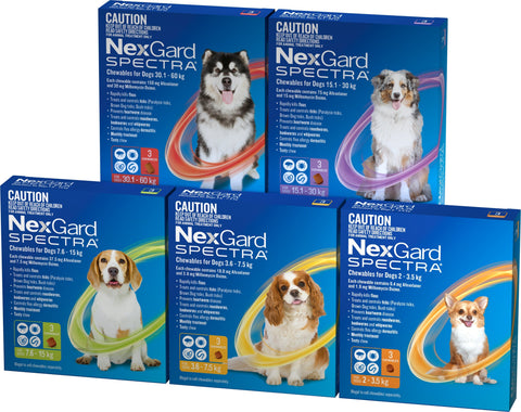 Image of Nexgard Spectra Ulitmate Protection Flea & Worming for Dogs - Chewable