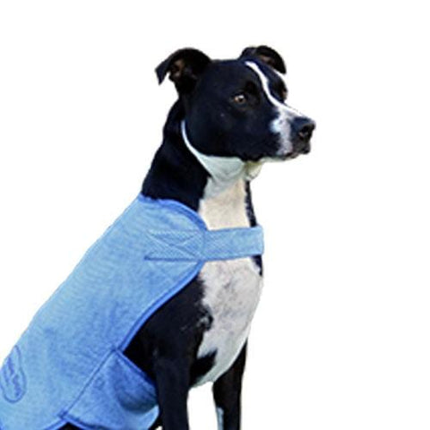 Image of Aussie Dog Wet Vest