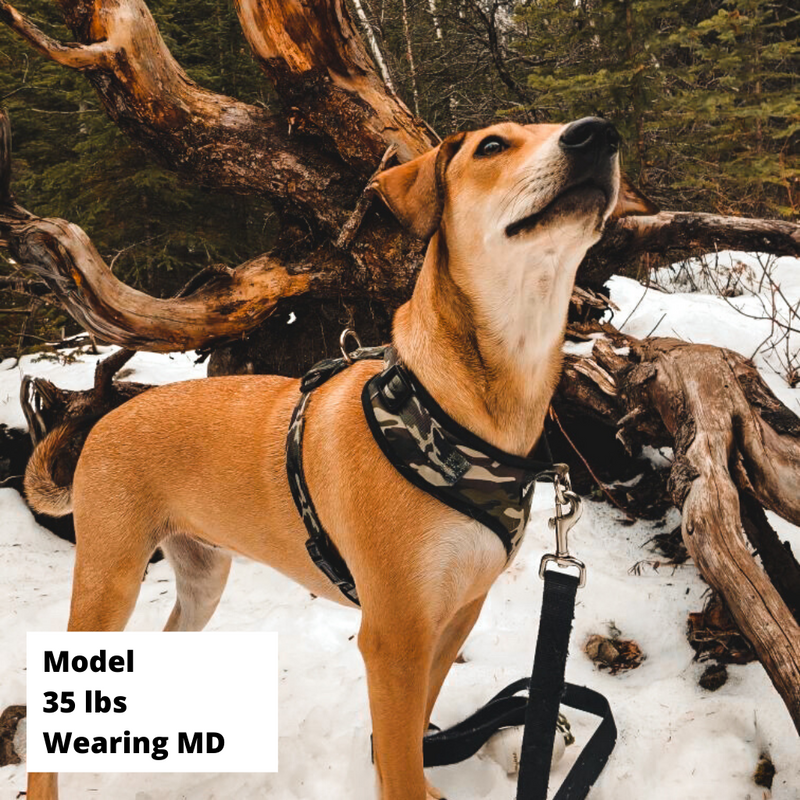 Control Dog Harness - Adventure Camo