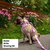 Control Dog Harness - Blush Pink