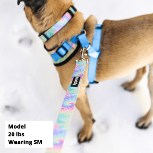 Dog Collar - The Classic
