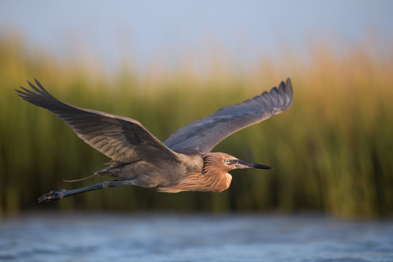 How To Instantly Improve Your Birds in Flight and Wildlife Photos