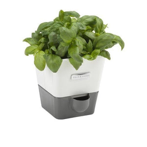 Cole & Mason Self Watering Herb Keeper - Single