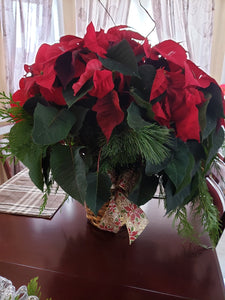 Red flashy Poinsettia business - from $33.34 Flower Arrangements, Flower, Florist, Print-a-Bunch Ottawa - Orleans Florist, Great for a Birthday and Anniversary