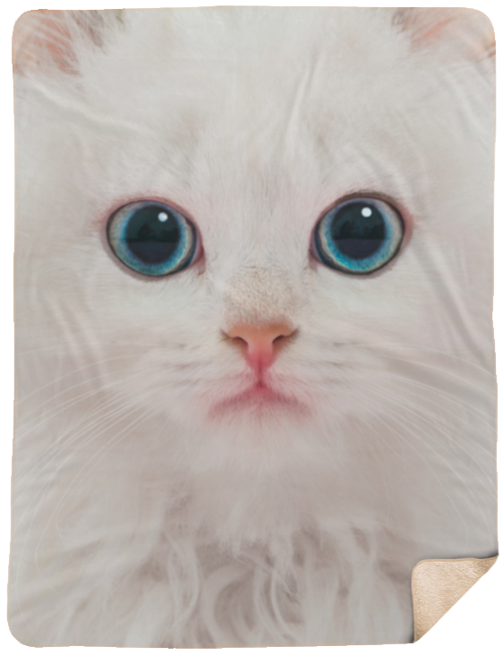 Cute Kitten Extra Large Fleece Sherpa Blanket