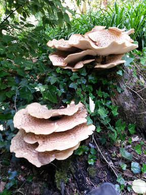 The Wonderful World of Mushrooms - Forage, Cook & Eat - Wicklow