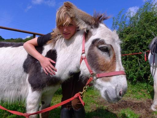 Walk with a Donkey & Organic Picnic at an Eco Friendly Resort - Galway