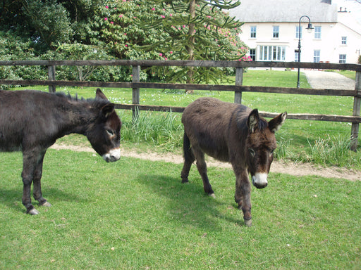 Ireland's Only Blackcurrant & Horse Breeding Farm Tour & Tasting - Wexford