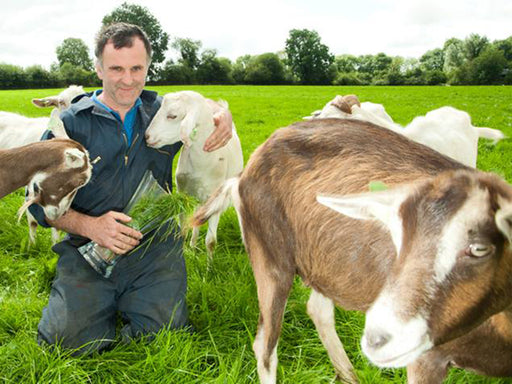 Hands-on Goat's Cheesemaking on Family Farm - Cork