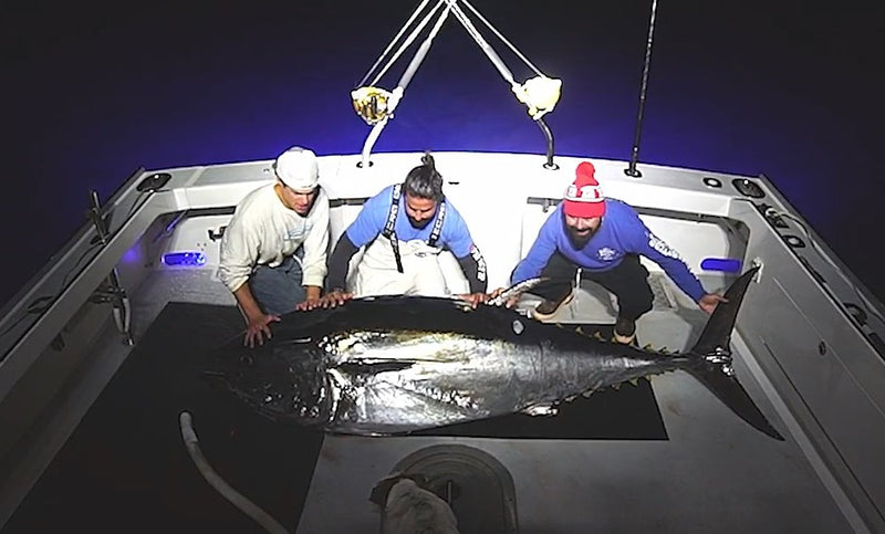Video: Catching a 600lb., 103