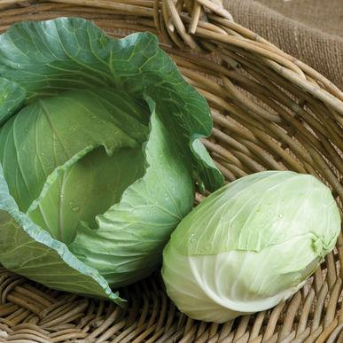 Tendersweet (Cabbage)