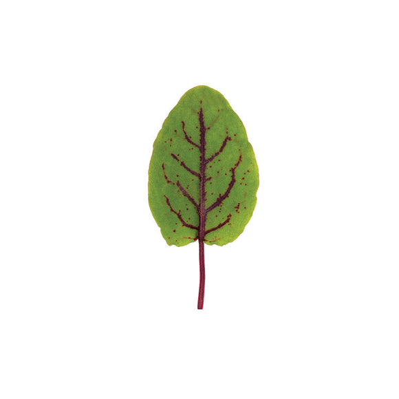 Red Veined Sorrel (Leafy Green)