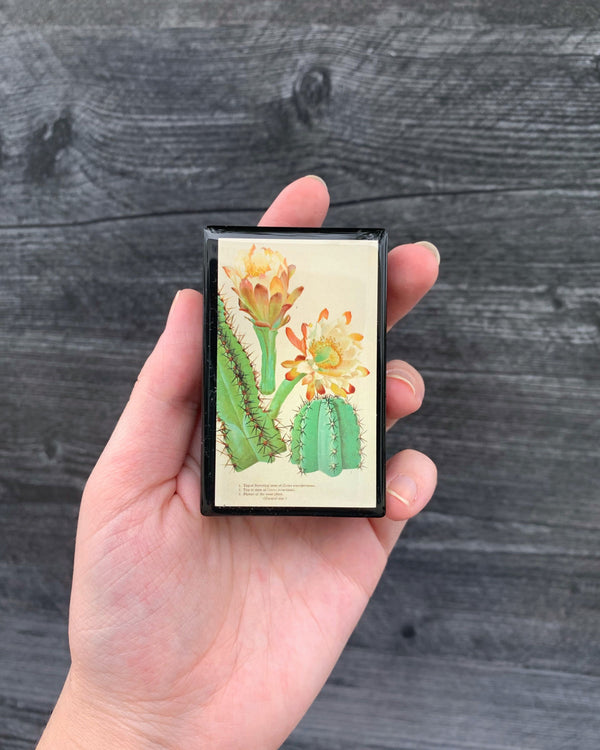 • CACTUS BLOOM • matchbox