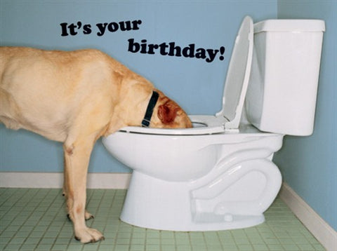 Dog Drinking Birthday Card