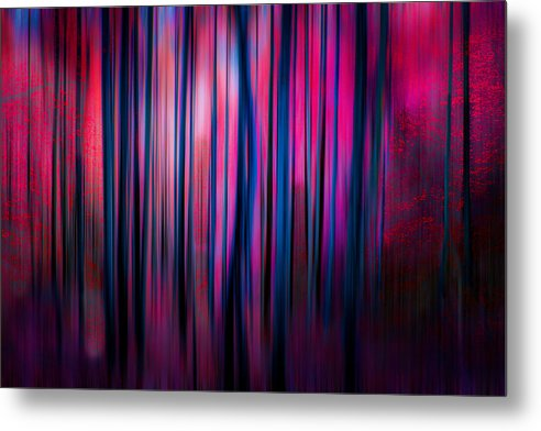 Can't See The Forest For The Trees... - Metal Print