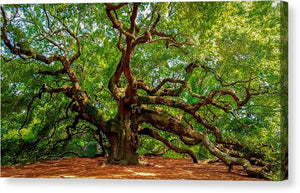 Charleston's Mighty Angel Oak - Canvas Print