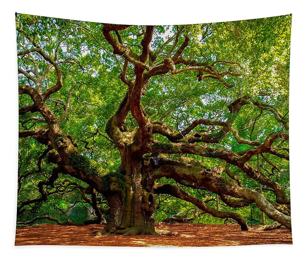 Charleston's Mighty Angel Oak - Tapestry