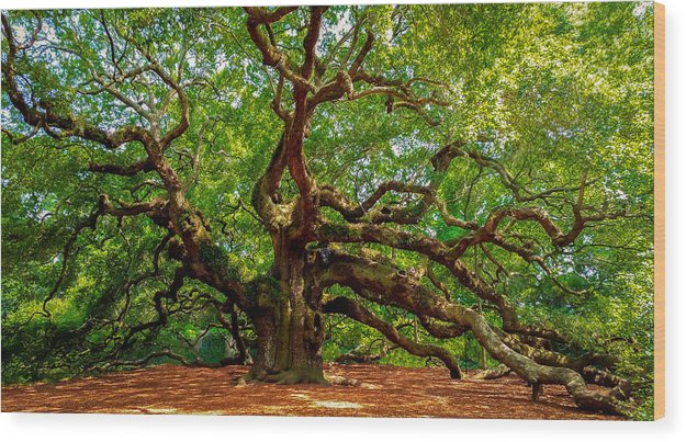 Charleston's Mighty Angel Oak - Wood Print