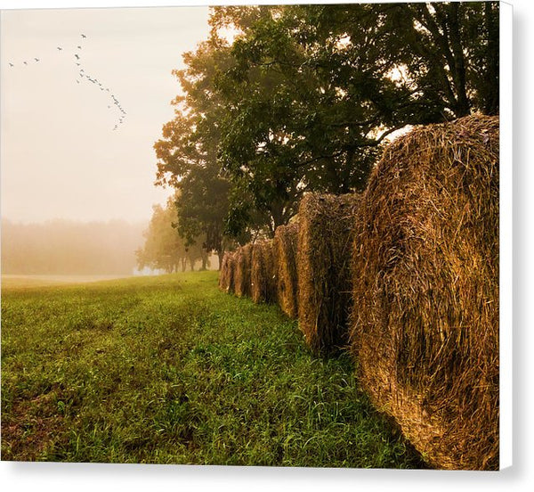 Country Morning Mist - Canvas Print