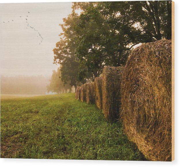 Country Morning Mist - Wood Print