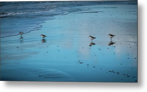 Four Plovers - Metal Print