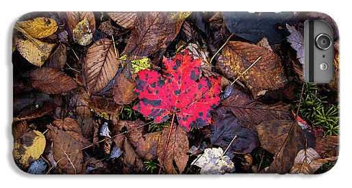 One Red Leaf - Phone Case