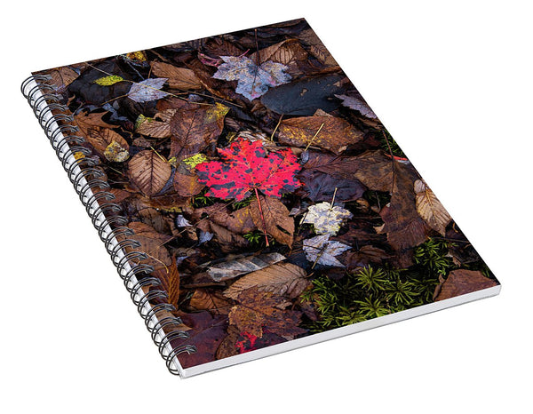 One Red Leaf - Spiral Notebook