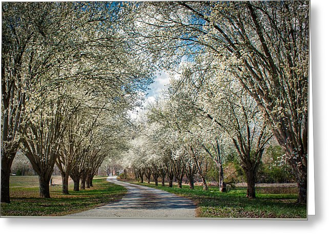 Spring Is Here - Greeting Card