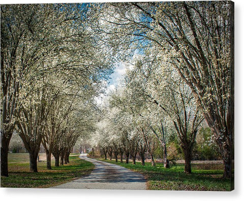 Spring Is Here - Acrylic Print