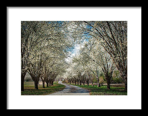 Spring Is Here - Framed Print