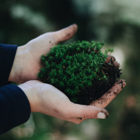 cupped hands holding a clump of green moss