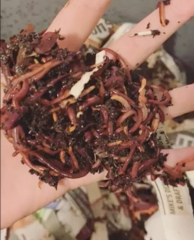 Simple Switch founder holding earthworms used for composting
