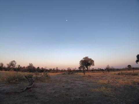 an African savannah at dusk with a visible star in the sky