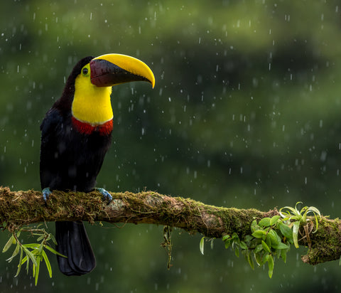 a tropical bird sitting on a tree branch in the rain