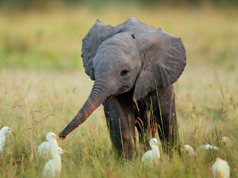 15 Cute Baby Elephant Pictures That Will Melt Your Heart