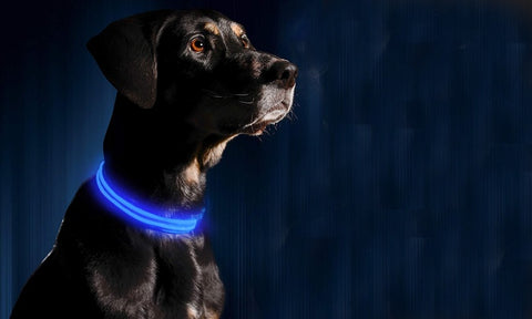 LED Dog Night Safety Collar