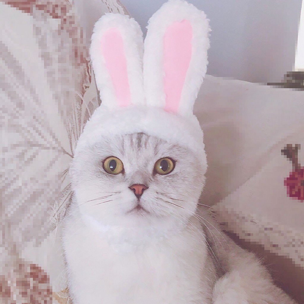 Bunny Rabbit Ears For Cat