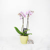 Orchid Vase Arrangement, floral gift baskets, gift baskets, flower gift baskets