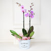 Potted Orchids, floral gift baskets, Valentine's Day gifts, gift baskets, romance