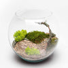 Toronto Same Day Flower Delivery - Toronto Flower Gifts - Plant Gifts - Terrarium