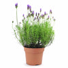 Toronto Same Day Flower Delivery - Toronto Flower Gifts - Plant Gifts