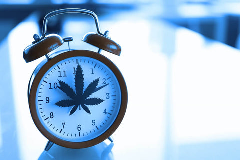 When is the best time to take CBD?