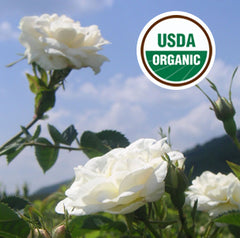 USDA Organic Rosa Alba Oil for wholesale