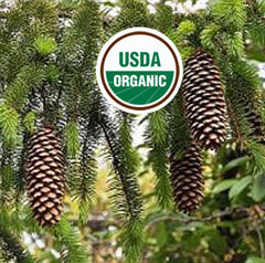 USDA Organic Picea Abies Oil Black Pine