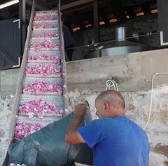 Our rose distillery during the season of rose oil processing