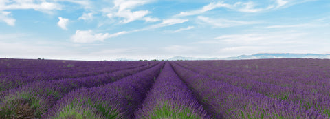 our-bulgarian-lavender-field