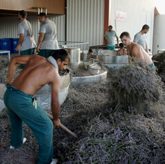 Our people, who are producing the most precious lavender